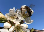 Schulen helfen Bienen